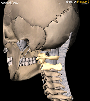 craniovertebral joint, atlanto-axial relationship, atlanto-axial articulation, atlas vertebrae, axis vertebrae, axis bone, atlas bone