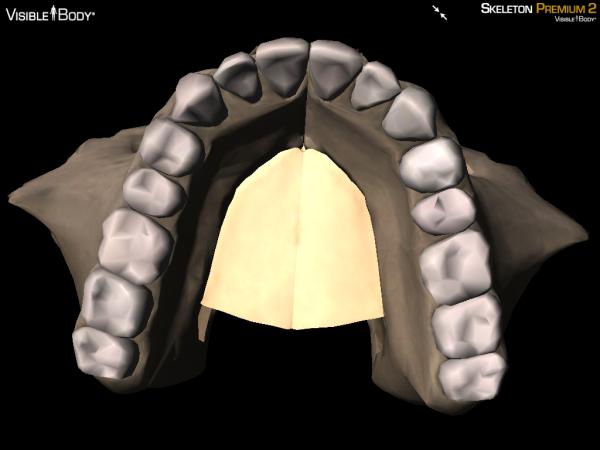 hard palate maxillae maxilla