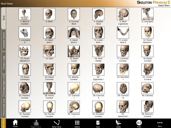 Skeleton 3D skeleton main menu