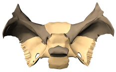 Sphenoid bone body
