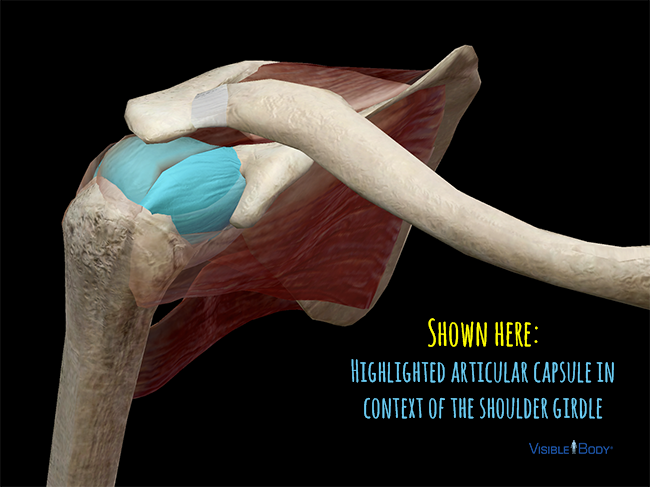 Shoulder-Girdle-articular-capsule-frozen-shoulder.png