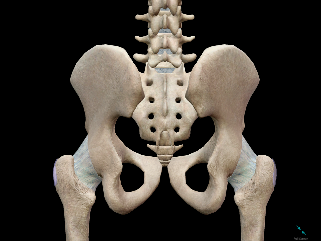 pelvic-girdle-back-hips.png
