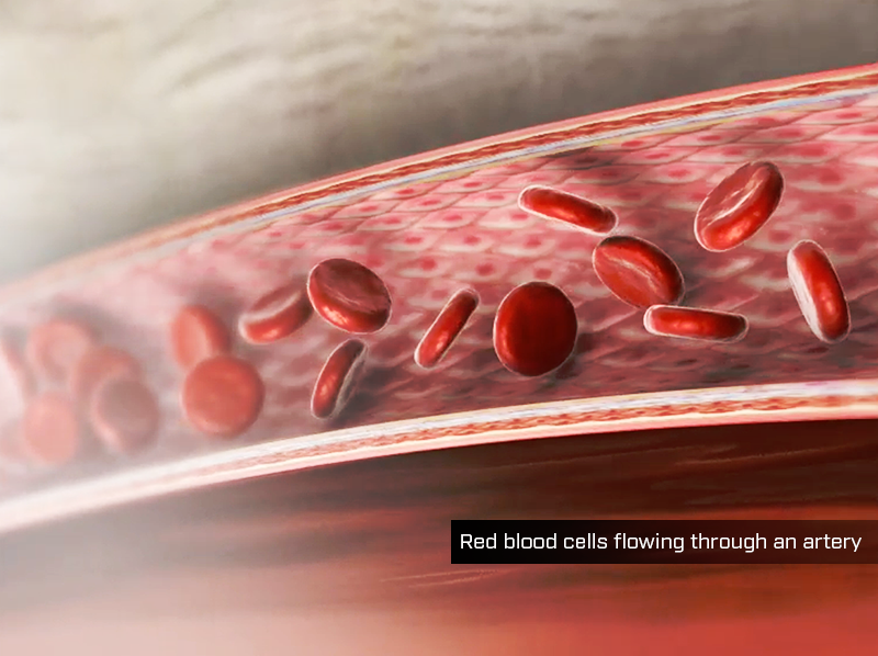 Red blood cells flowing through an artery