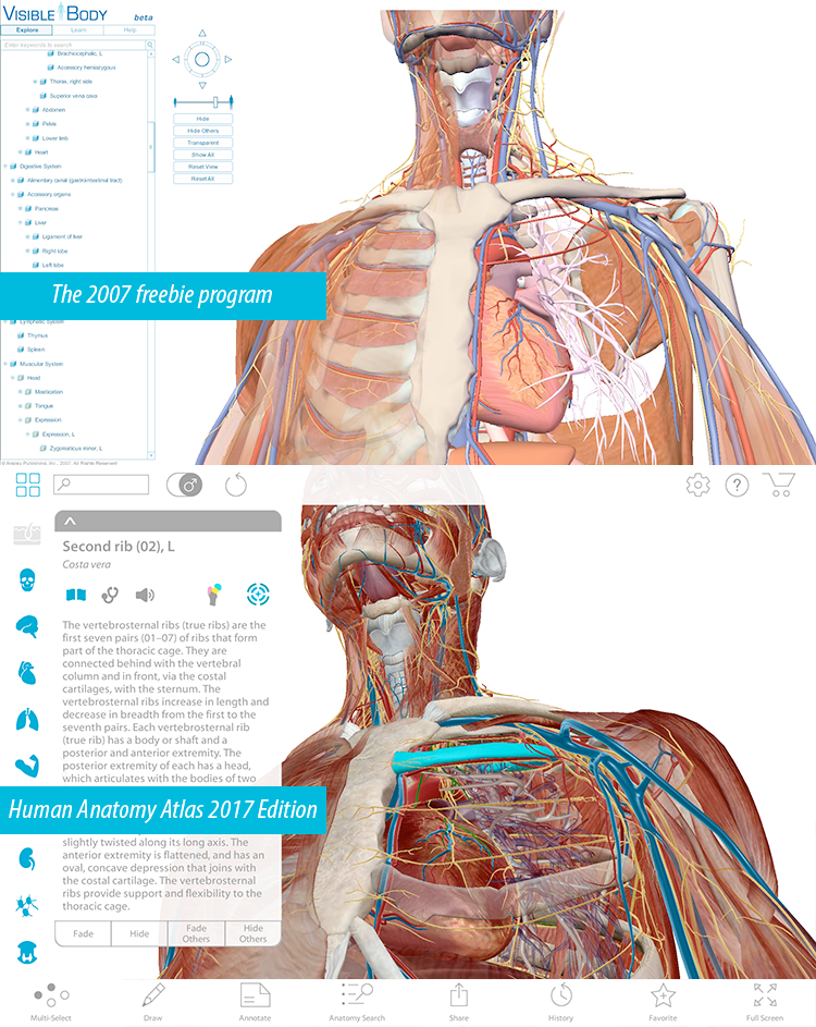 Visible body anatomy