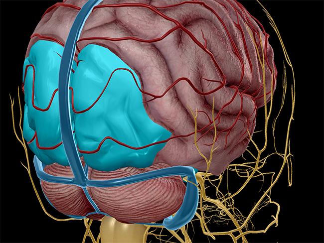 Occipital lobe, highlighted in blue.
